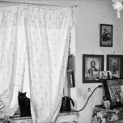жил да был чёрный кот