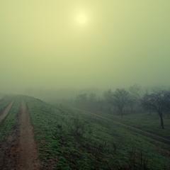 Пробуждение в тумане