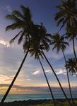 Пальмовый закат