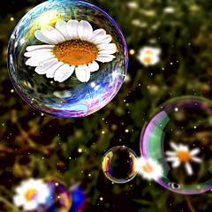 Сквозь мыльный пузырь