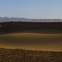 Desert Rose _ ранок