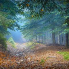 У казковому лісі