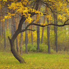 Танец Осени