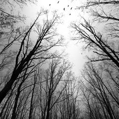 в темно-сером лесу ...