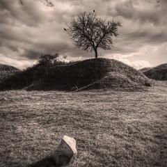 история одного дерева