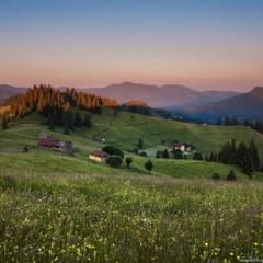 Карпаты. Цветущие склоны вечером у Дземброни.