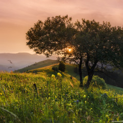 Карпаты. Закат солнца с деревом.