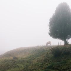Италия. Доломиты. Туманное утро у плато Alpe di Siusi