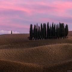 Италия. Тоскана. Кипарисовый остров на закате в San Quirico d'Orcia