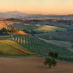 Италия. Тоскана. Вечерний свет в долине Val d'Orcia