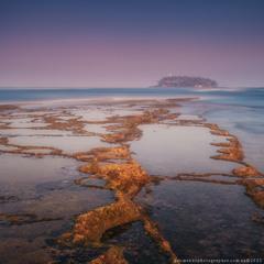 Шри Ланка . Коралловый риф у острова Barberun