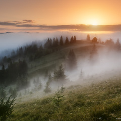 Украина. Карпаты. Дземброня. Утренний туман