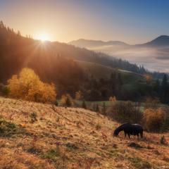 Карпаты. Утро на склонах у села Дземброня