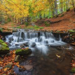 Закарпатье. Осенний лес у речушки Пилипец