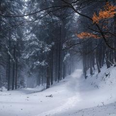 Зимний лес по дороге на Петрос