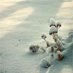 Зимние опята