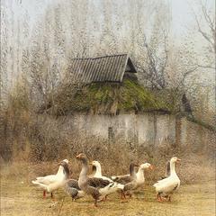 В любую погоду )