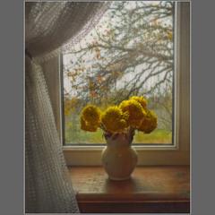 Останні хризантеми...