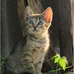 Охотник)))