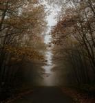 Осінній туман...