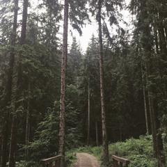 Лісова дорога .....