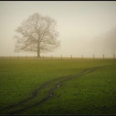 Туманными тропами...