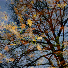 Отражение Осени...