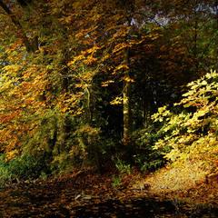 Осенняя палитра...