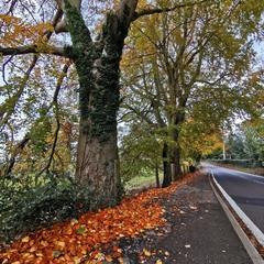 По дороге в Осень......
