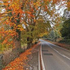 Дорога в Осень...