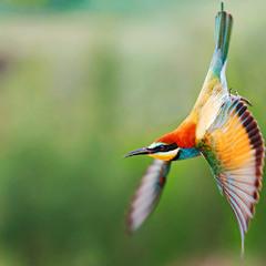 Birdy - rainbow