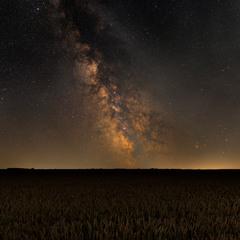 В ночном поле