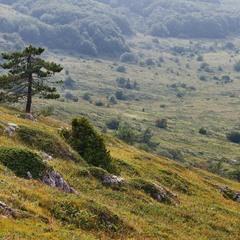 Спускаясь с горы Чатыр-Даг. Крым
