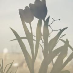 силуэты весны