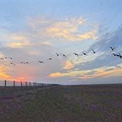 Птицы на Юг полетели