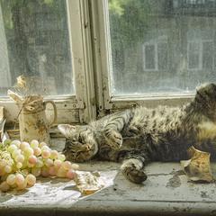осенние радости домашнего кота