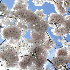 Небо в цветочек