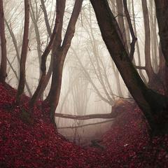 forest gamma