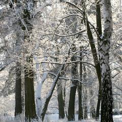 однажды в студёную зимнюю пору...