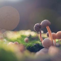 Веселі грибочки