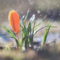 Весна прийшла!
