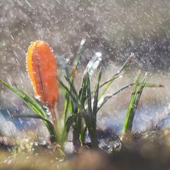 У березня сім погод
