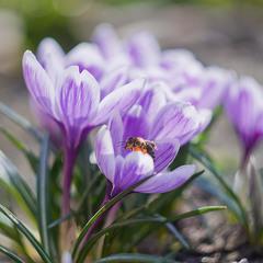 Весняна пора