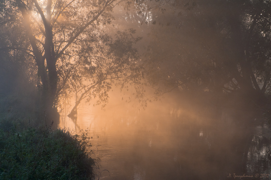 красивые фото пейзаж сад в тумане съёмка
