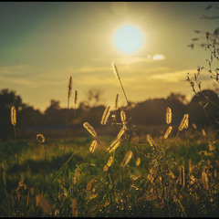 Я родилась на закате лета…