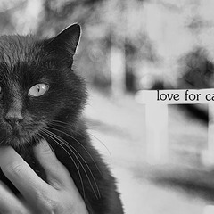 love for cats