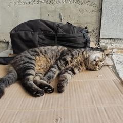 Из жизни  бездомных кошек.