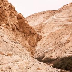 В пустыне Арава.