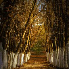Осени почетный караул