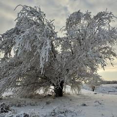 Зимушка- зима
